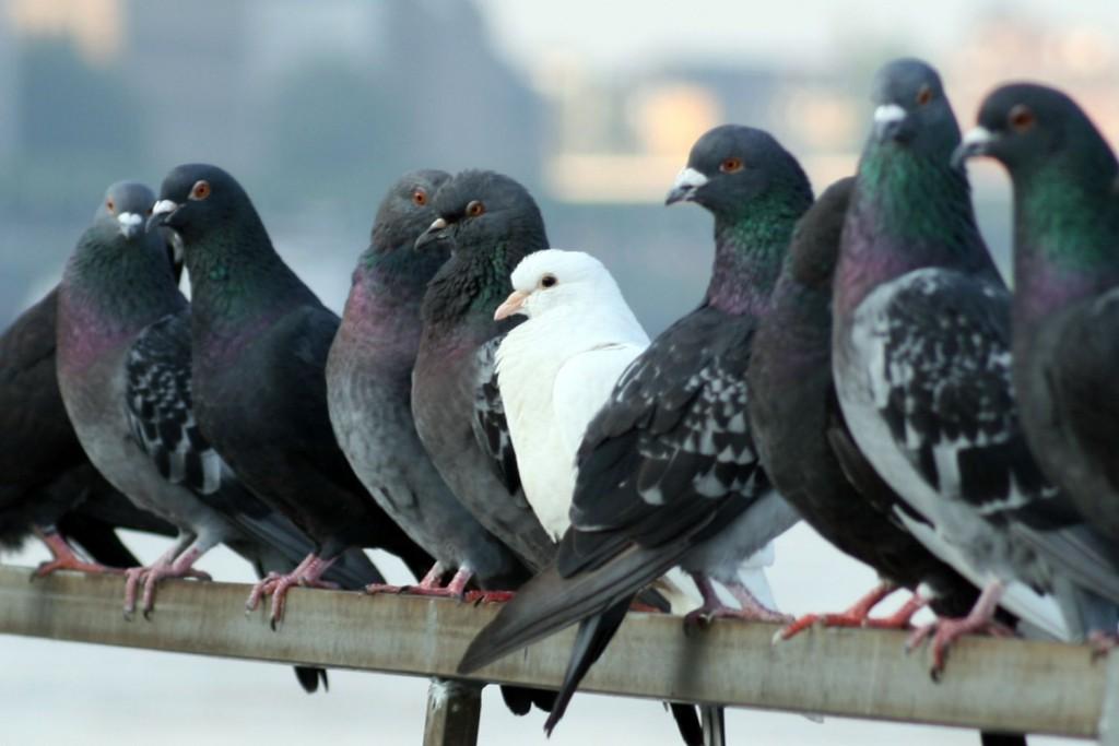 control de plagas palomas toledo
